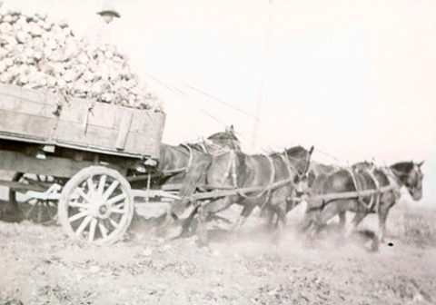 Farming - Legrand Hale with 7.5 tons of beets
